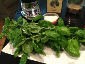 Freshly Picked Basil ready to make Pesto